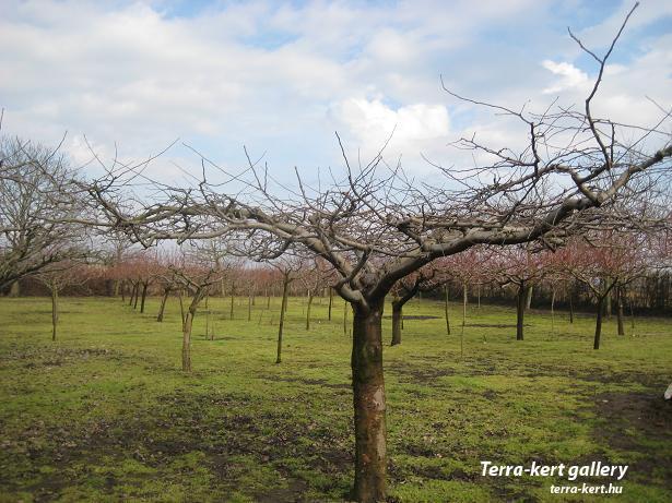 http://terra-kert.hu/gallery/image.php?image_id=686