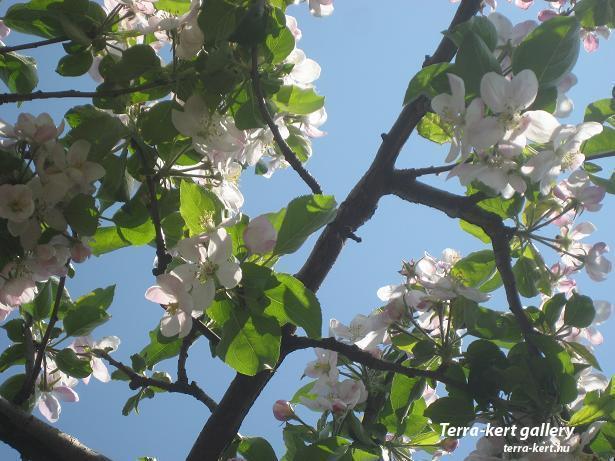 http://terra-kert.hu/gallery/image.php?image_id=688